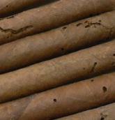 cigares parasités par le liasoderme, la solution